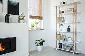 White bookcase, fireplace and window with plants set in a modern living room interior