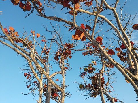 white branches with orange leaves against blue sky