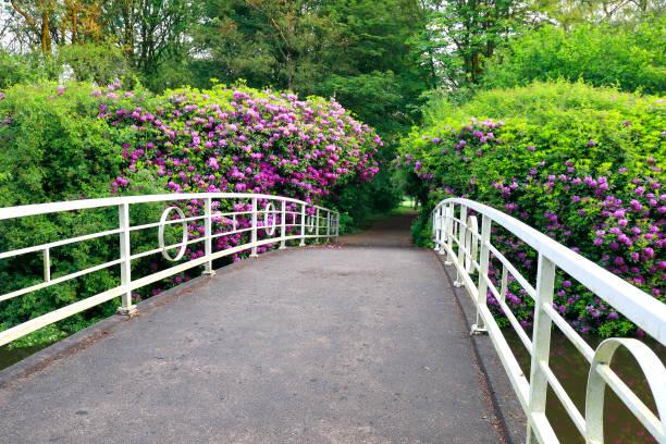 witte brug en pad tussen roze bloemen in het voorjaar foto