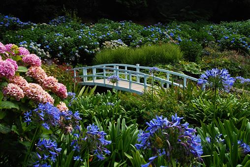 White Bridge at Trebah Garden
