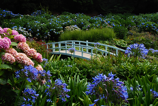 White Bridge at Trebah Garden