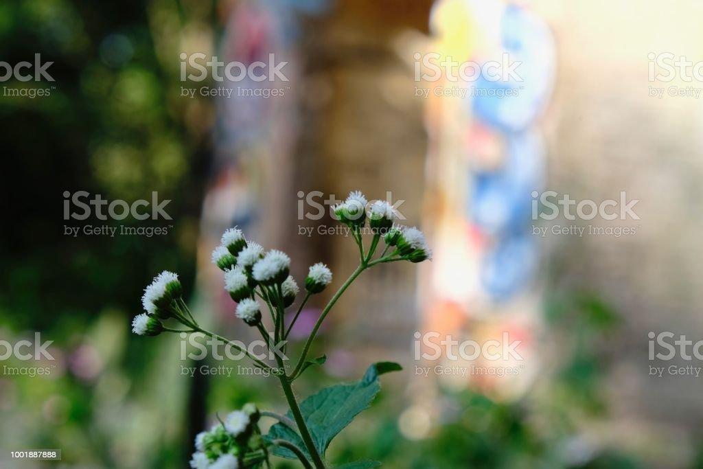 White buds stock photo