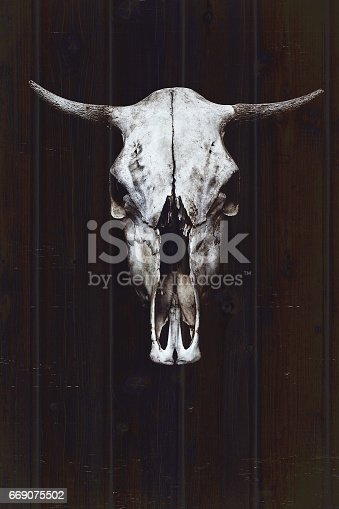 istock White bull's skull with horns on the background of wooden boards 669075502