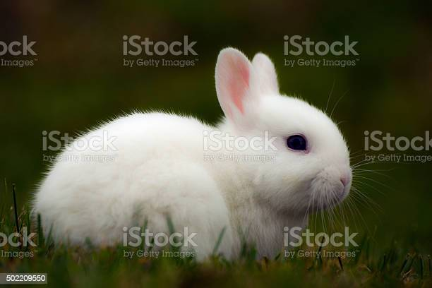 White bunny in grass picture id502209550?b=1&k=6&m=502209550&s=612x612&h= lnbflnfurqp iwf4vjlmd orbudu0vwjqavdtcmcrw=