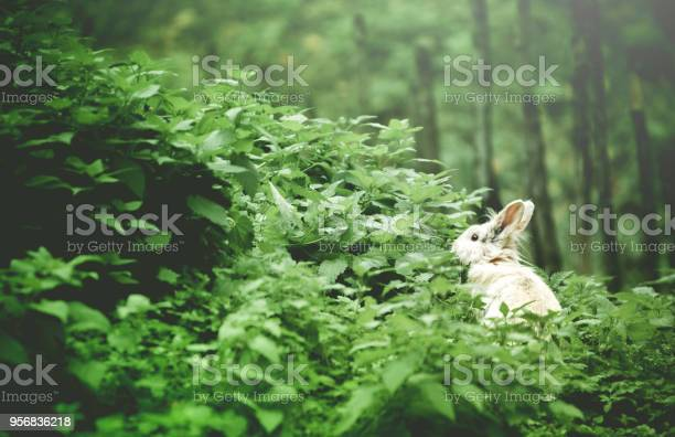 White bunny in the frest picture id956836218?b=1&k=6&m=956836218&s=612x612&h=ged2jb3z e3nfn2fuetj6bfie0mgr7tlb2zfee9llws=