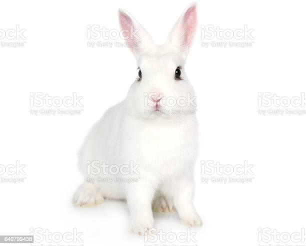 White bunny isolated on white picture id649799438?b=1&k=6&m=649799438&s=612x612&h= apywn nekc8axqtr08i2jiwqstysb94qzpvyotzoz0=