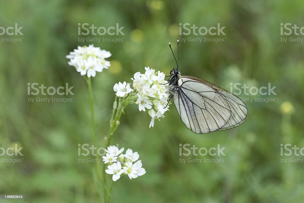 white butterfly on flower stock photo