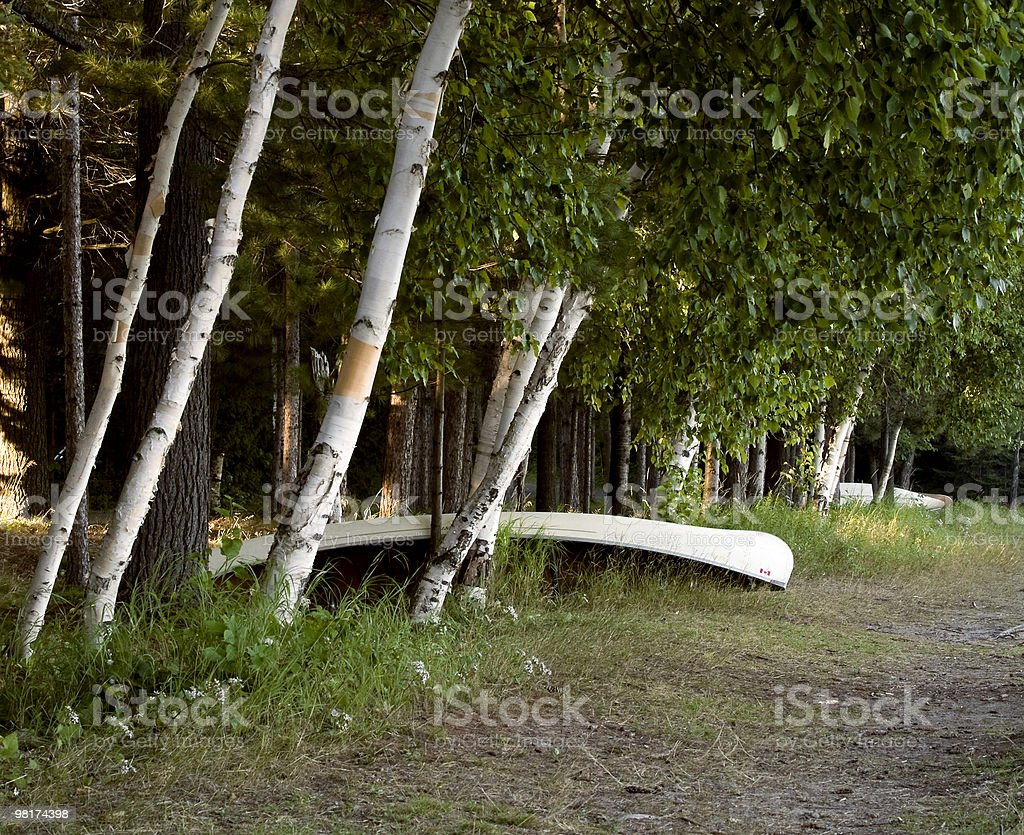 White Canoe and Birches royalty-free stock photo