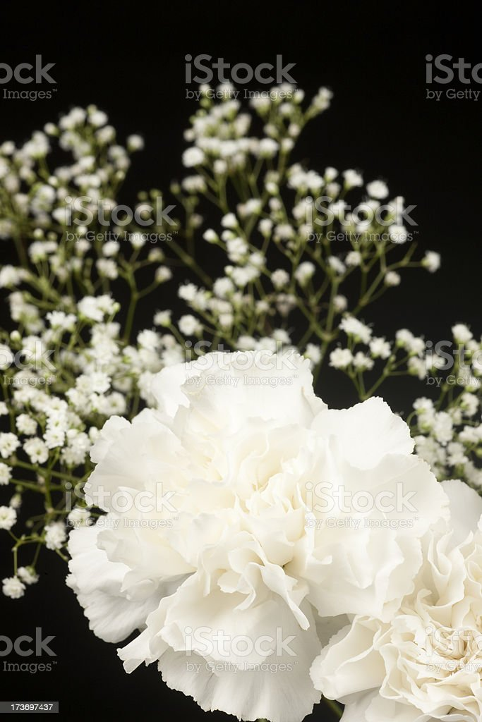 White Carnation Floral Arrangement, Isolated on Black, Flower, Petal stock photo