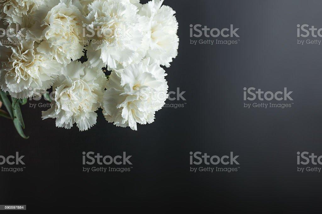 white carnation studio shot with black background stock photo