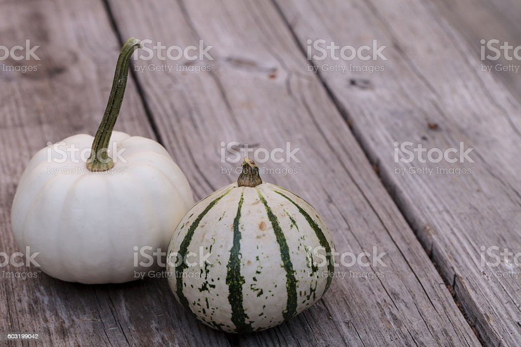 White Casper pumpkin and green gourd stock photo