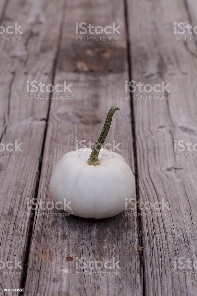 White Casper pumpkin stock photo