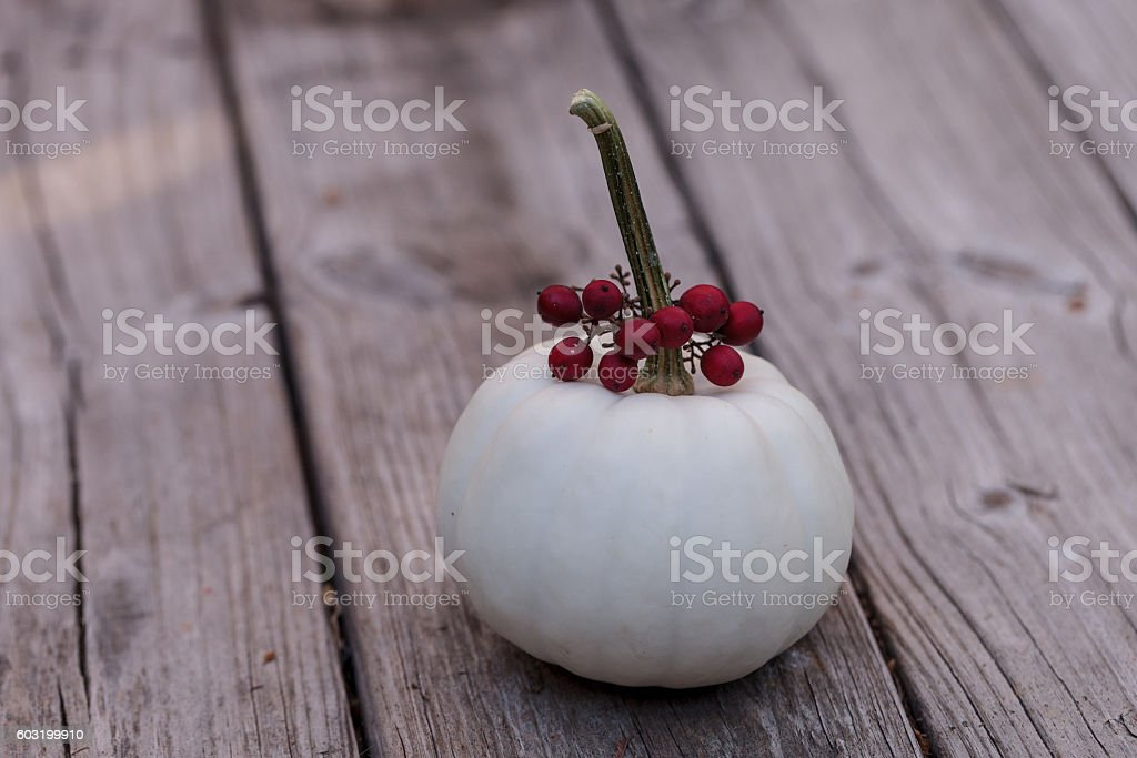 White Casper pumpkin with red berries stock photo