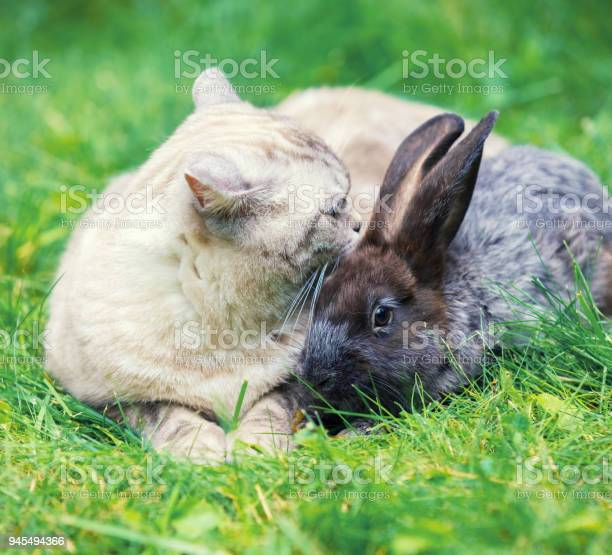 White cat and brown rabbit sitting together on green grass in spring picture id945494366?b=1&k=6&m=945494366&s=612x612&h=2777 1ctss08yjfc5foak4ytfhrfelu fugmjzflxro=