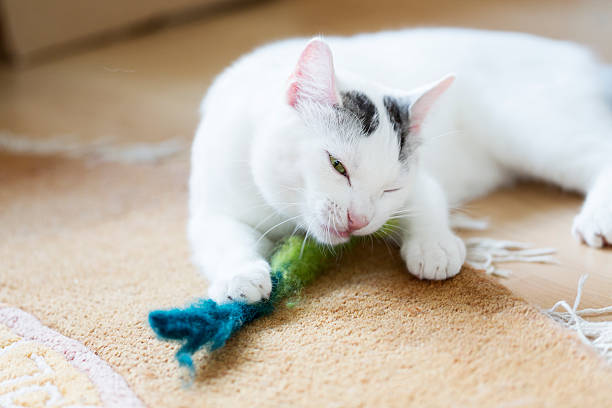 White cat and its toy picture id468864546?b=1&k=6&m=468864546&s=612x612&w=0&h= tpw6sypwrhakdfbbuprsafbgi32ue7svitcpjm v3q=