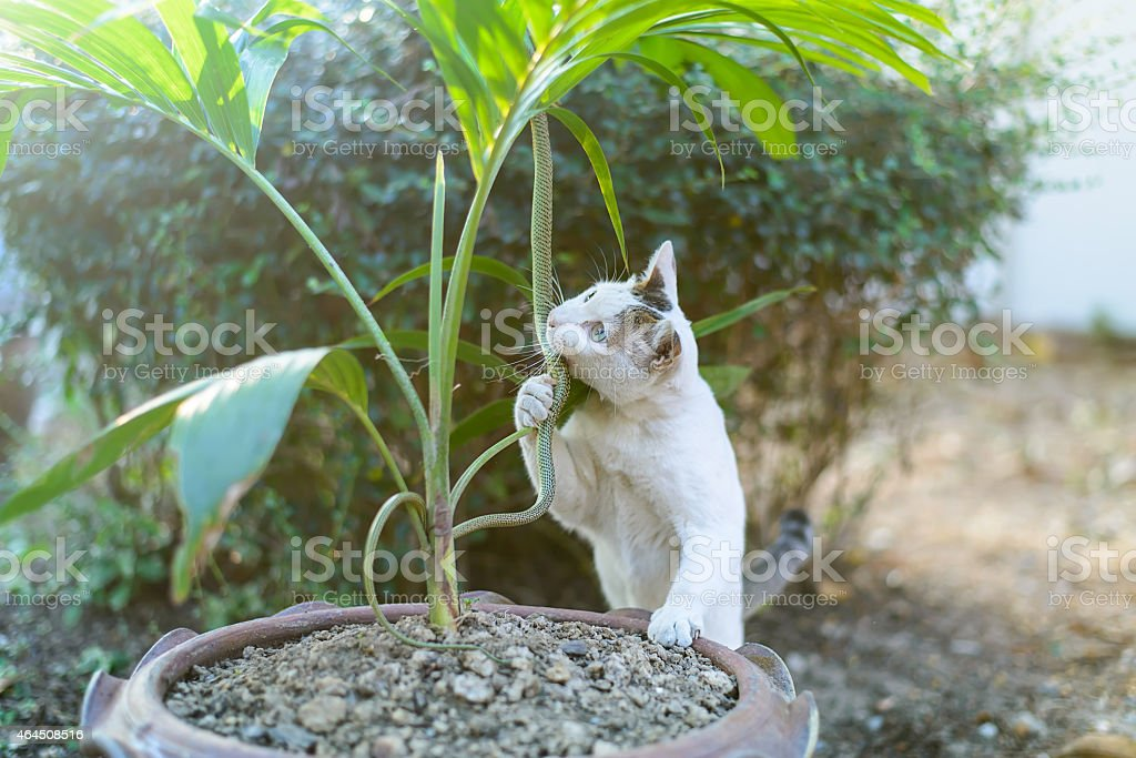 White cat fight green snake in untidy dirty garden, danger stock photo