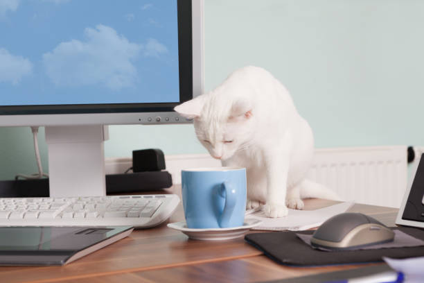 White cat have a coffee break picture id904123790?b=1&k=6&m=904123790&s=612x612&w=0&h=1ibrjzvv1qn8d1lf0driqh3lzhmjitoub4we1v6uunc=