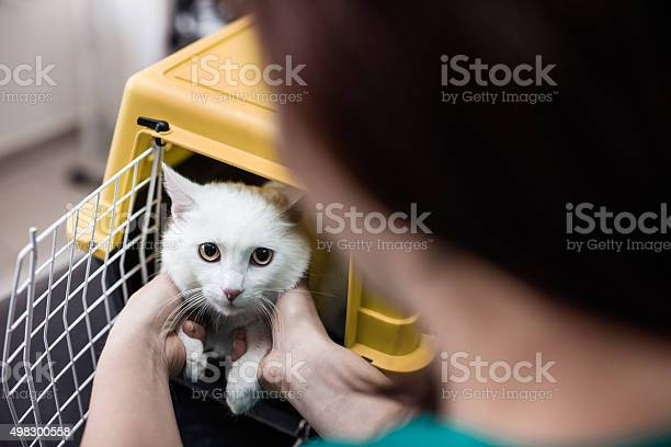 White cat in a cage at vets office picture id498300558?b=1&k=6&m=498300558&s=612x612&h=ufkzhkgkef0tyycxstgafteauqomnukxkyzfp3d1 r8=