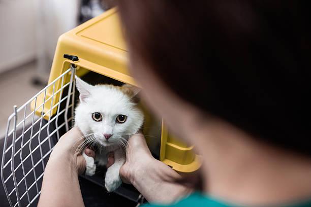 Weiße Katze in einem Käfig in Tierarzt's Büro. – Foto
