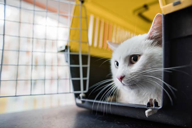 Weiße Katze in einem Käfig befinden. – Foto