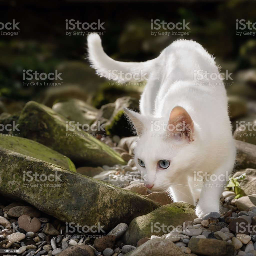 White cat in free nature stock photo