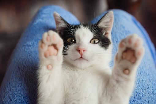 istock White cat lies on woman's knees 938702108