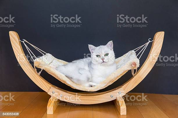 White cat lying lazy in hammock picture id543053408?b=1&k=6&m=543053408&s=612x612&h=srktftd4x83zmmfhsq49iqykjqmwmgtc2h1skyn19qi=