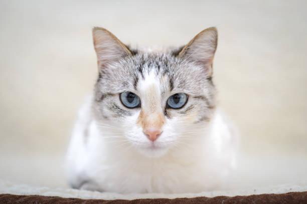 White cat lying on the sofa picture id1163674106?b=1&k=6&m=1163674106&s=612x612&w=0&h=nj8fgossyot1b6fsa0d2ejgy9dbmuustr2es4ep0xee=