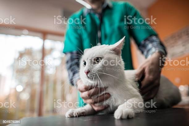 White cat on a medical exam at veterinarian office picture id504929094?b=1&k=6&m=504929094&s=612x612&h=i5xgq2dmyztaszmdhtsoxblzpncjpwg3cq2t670cnny=