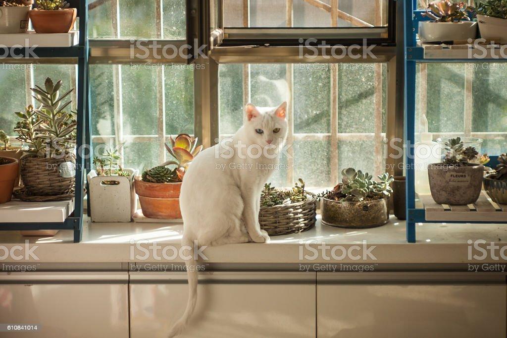 White cat on a windowsill stock photo