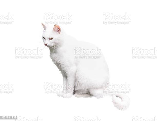 White cat on white background picture id531811939?b=1&k=6&m=531811939&s=612x612&h=zlgpkqpx8bjdabpjbpzudrczwblk8lyb55ggxc gszu=