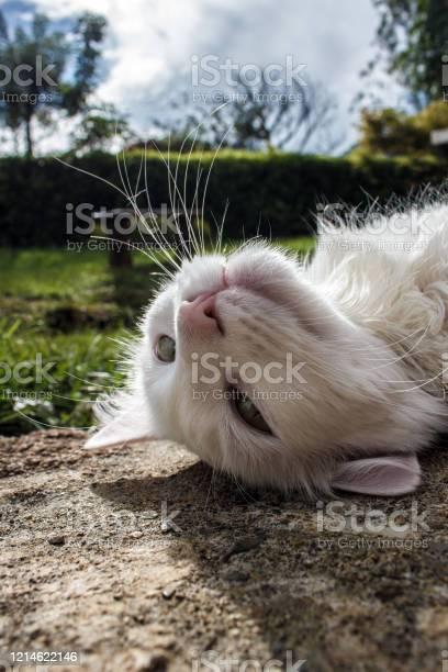White cat pet picture id1214622146?b=1&k=6&m=1214622146&s=612x612&h=qpwvg1cft1xa9gtenx4ussjdtgt9swp8ovsed  jqvm=