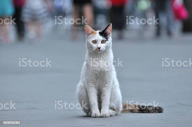 White cat picture id493856063?b=1&k=6&m=493856063&s=612x612&h=82zwkwdqv0bgkdtljwm6zfvdhle8txjos44lp5y4vys=