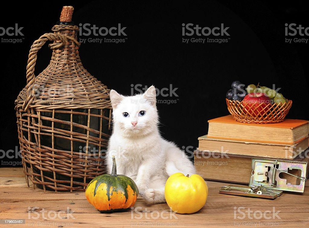 White cat posing royalty-free stock photo