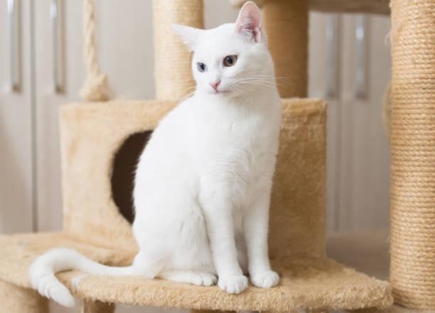 White cat sits on scratching post picture id1205824880?b=1&k=6&m=1205824880&s=612x612&w=0&h=azkglaxjqeb3v64ocpx bsa1cofisp0hrszbkrzjoyc=