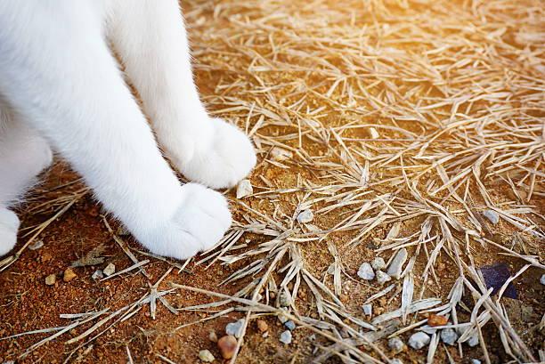White cat sitting focus on legs picture id607506972?b=1&k=6&m=607506972&s=612x612&w=0&h=bpkdqua40ehucsup2djakx agkhtk3rkk43ab3hksj0=