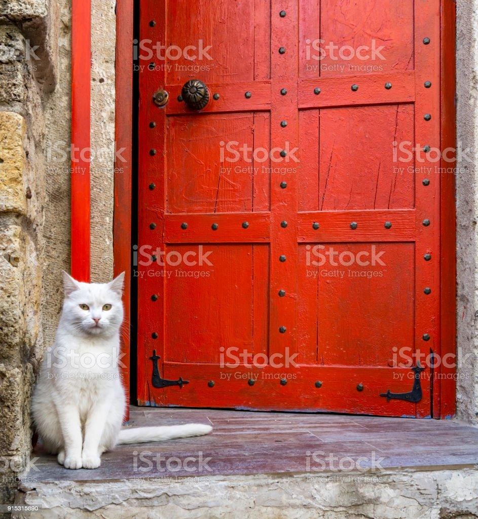 Witte kat vergadering in de voorkant van een rode deur foto