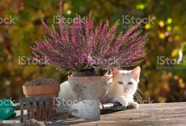 White cat sitting in garden picture id863552786?b=1&k=6&m=863552786&s=612x612&h=kenphxx7blnrrdln35pm0r  e3wvkqnxtlgnbypwsl8=