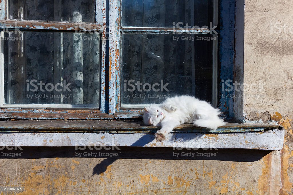 White cat sitting on an old window stock photo