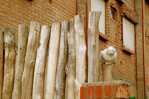 weiße katze sitzt auf rustikalen holzzaun vor dem ziegelhaus - pole scheunen designs stock-fotos und bilder