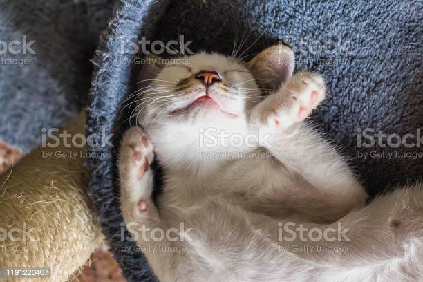 White cat sleeping picture id1191220467?b=1&k=6&m=1191220467&s=612x612&h=yvbtemfjn4gadedkhv16uu7v fzxthb2ualdhrbjvjk=