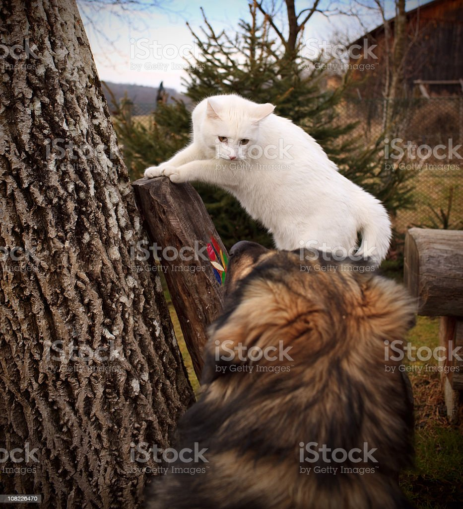 White Cat Staring at Dog Outside royalty-free stock photo