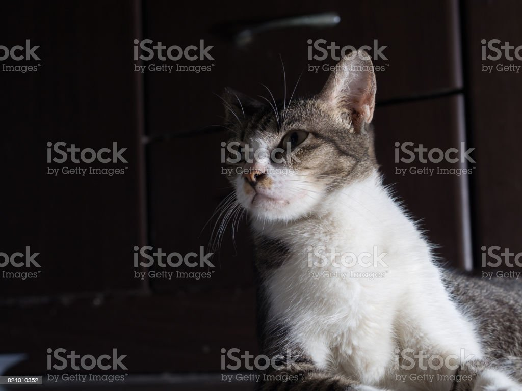Gato branco, estrelando a sério - foto de acervo