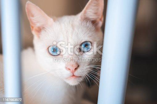 Kitten, Animal Eyes, Animal Head, Feline, Pets
