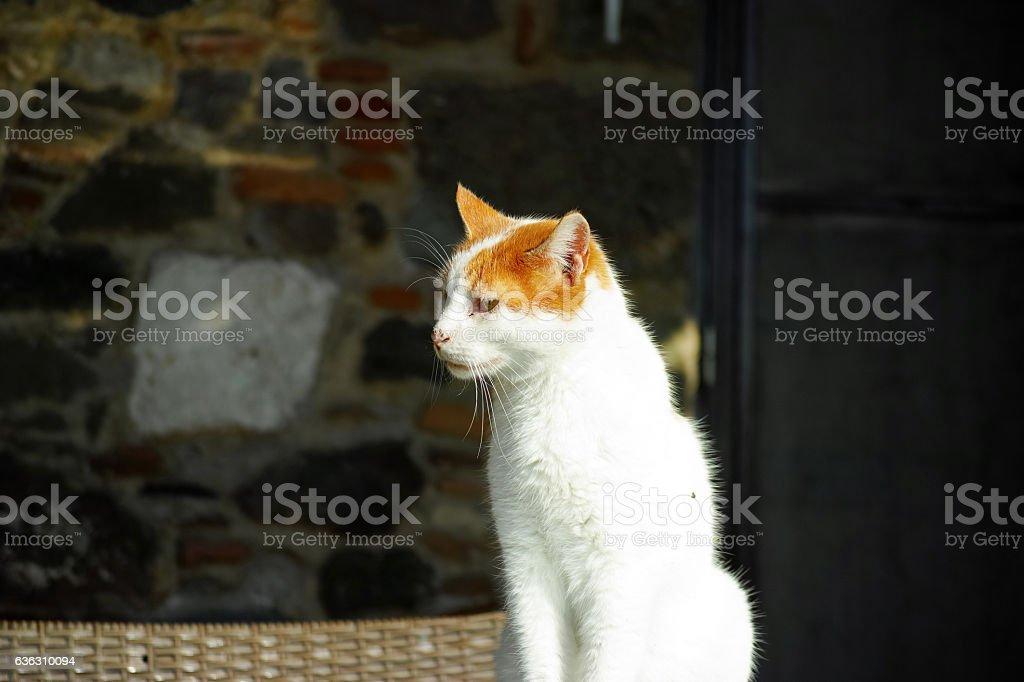 White Cat With Red Head Watching Around stock photo