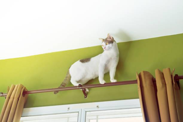 weiße katzen klettern auf jalousien. - suche katze stock-fotos und bilder