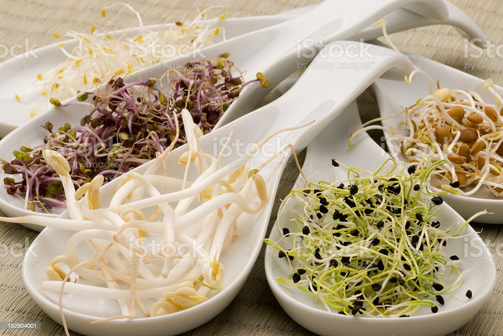 White ceramic serving spoons with assorted sprouts stock photo