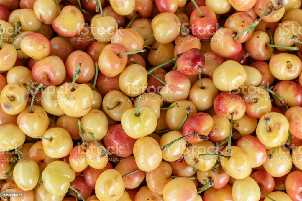 White cherries - Royalty-free Agriculture Stock Photo