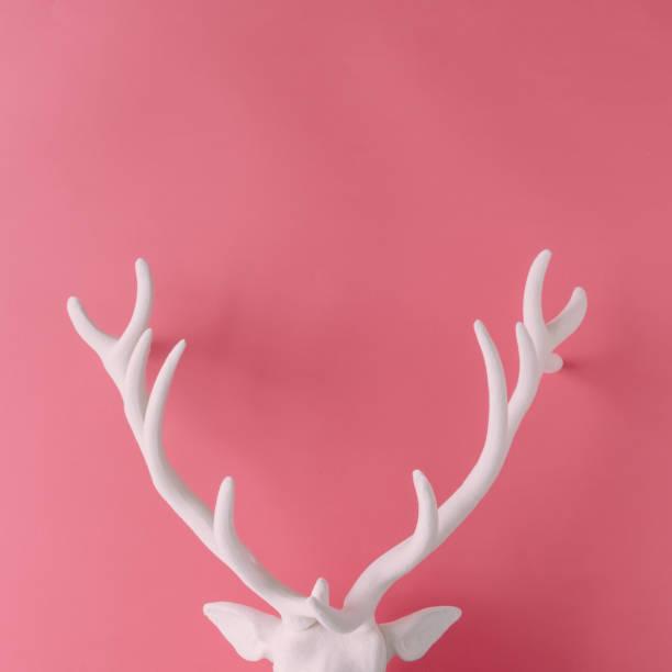 weiße weihnachten rentier kopf mit geweih auf rosa hipster hintergrund. flach zu legen. neujahr-konzept. - geweih stock-fotos und bilder