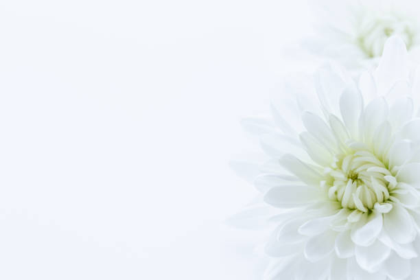 funeral background stock photos pictures  royaltyfree